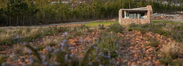 Beseba Farm rosemary growing
