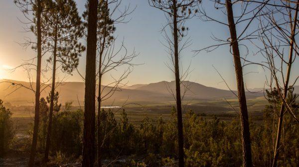 Berseba farm mountain view