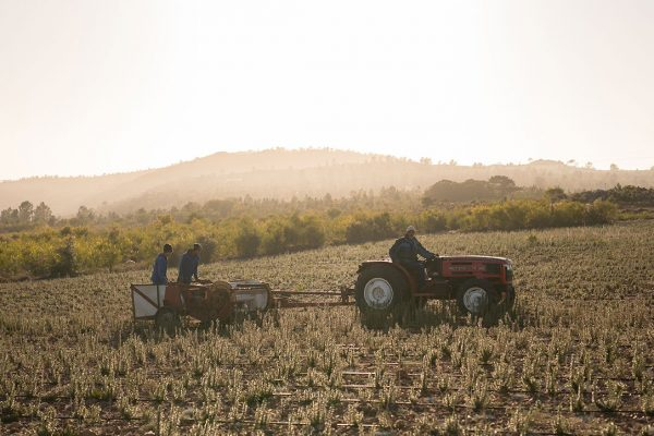 Berseba Farm workers with tractor